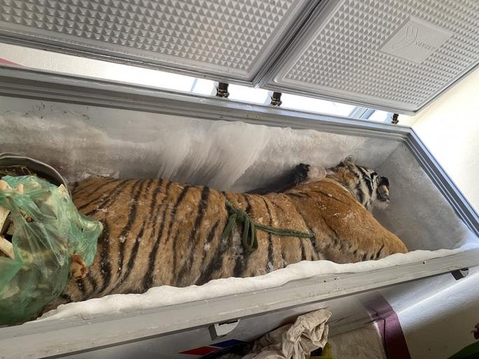 Con hổ đông lạnh được lực lượng chức năng phát hiện trong nhà Nguyễn Văn Chung (Ảnh Công an Hà Tĩnh)