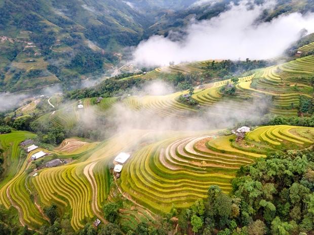 Mùa vàng Hoàng Su Phì (Hà Giang) đẹp như một bức tranh