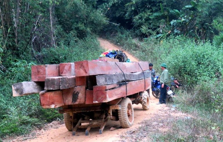 Tang vật của một vụ phá rừng được lực lượng chức năng huyện Ea Kar phát hiện. (Ảnh minh họa)