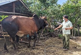 Anh Đinh Trê (làng Bút, xã An Thành) bên con bò giống được thụ hưởng từ Dự án