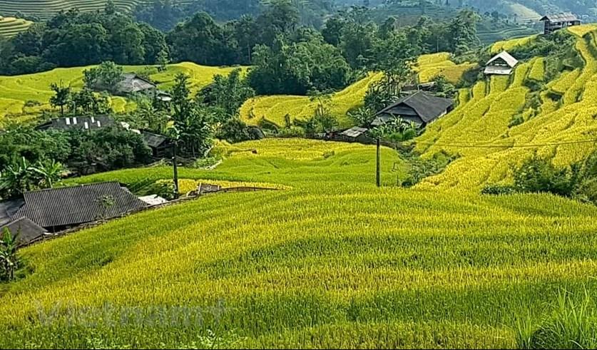 Tới đây du khách sẽ có những góc nhìn đầy mới mẻ và lạ lẫm về mùa vàng trên những thửa ruộng bậc thang. (Ảnh: Đỗ Hùng/Vietnam+)