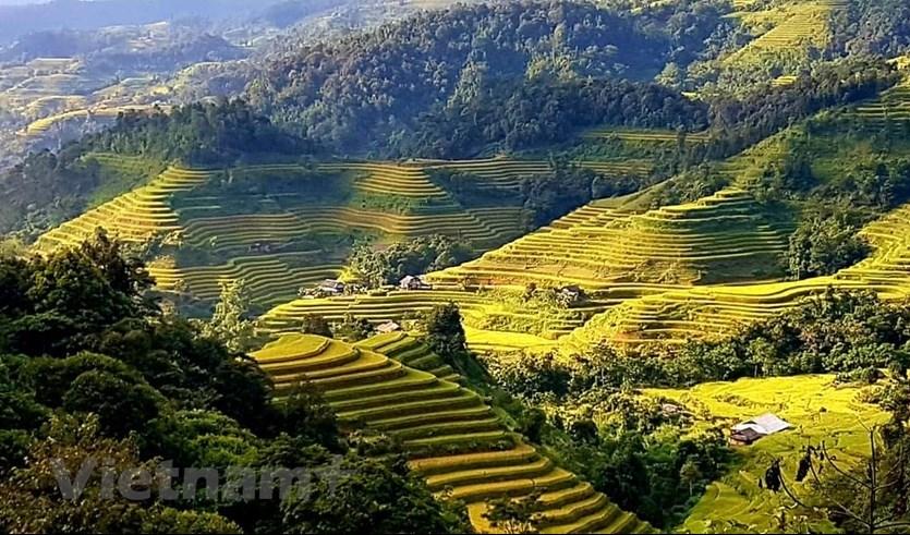 Lúa Hoàng Su Phì thường chín muộn hơn, vào giữa tháng 10. (Ảnh: Đỗ Hùng/Vietnam+)