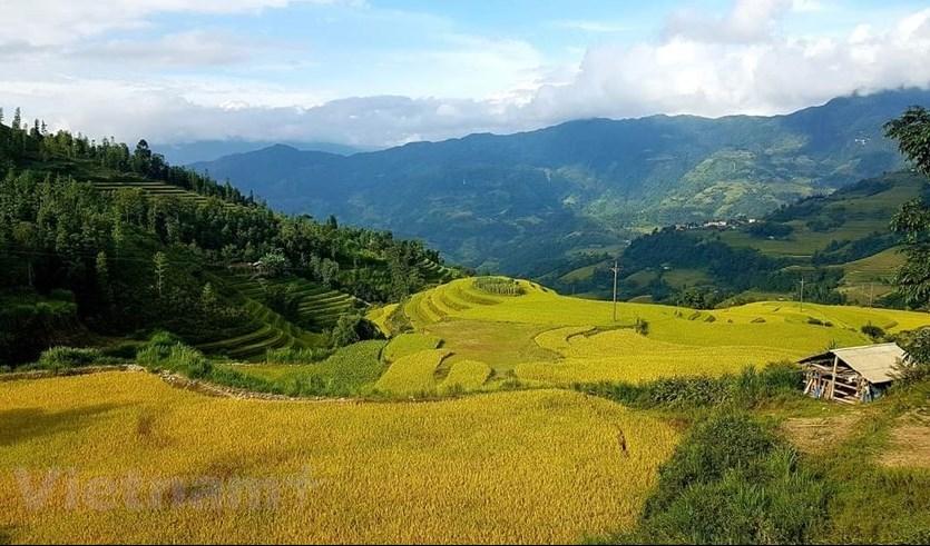 Tuy không được nổi tiếng như lúa Y Tý, Mù Cang Chải, nhưng không vì thế mà ruộng bậc thang nơi đây lại kém phần lộng lẫy, nên thơ. (Ảnh: Đỗ Hùng/Vietnam+)
