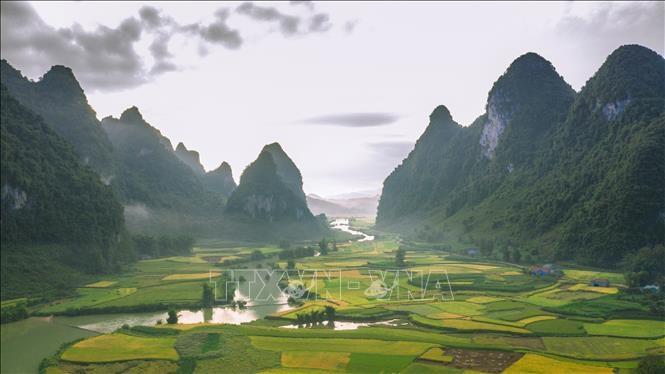 Mùa lúa chín ở Trùng Khánh thu hút du khách đến Cao Bằng. Ảnh: TTXVN