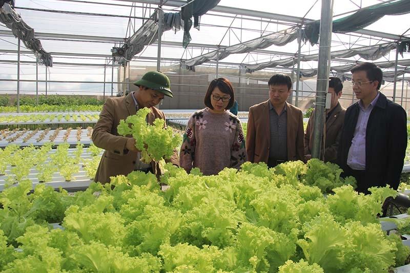 """Nghị quyết """"Tam Nông"""" đã giúp thị xã Quảng Yên (Quảng Ninh) phát triển nông nghiệp theo hướng sản xuất công nghiệp, hiện đại"""