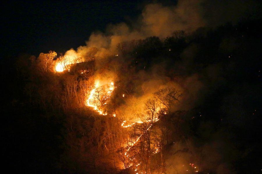 Những đám cháy phá hủy rừng Amazon