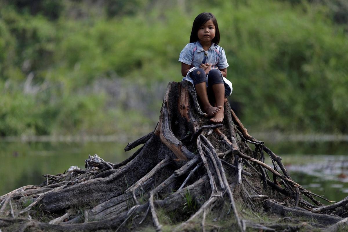 ức ảnh gửi đến truyền thông quốc tế thông điệp tiếng kêu cứu của cây rừng bị chặt phá, rừng Amazon cần được mọi người chung tay bảo vệ