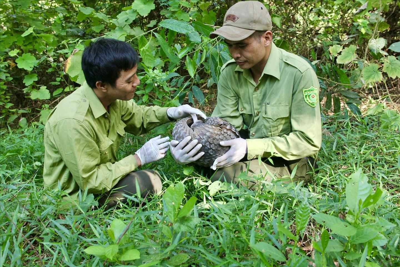 Niềm vui của Huy (người bên trái) và đồng đội khi giải cứu thành công một chú tê tê. (Ảnh Lê Tất Thành)