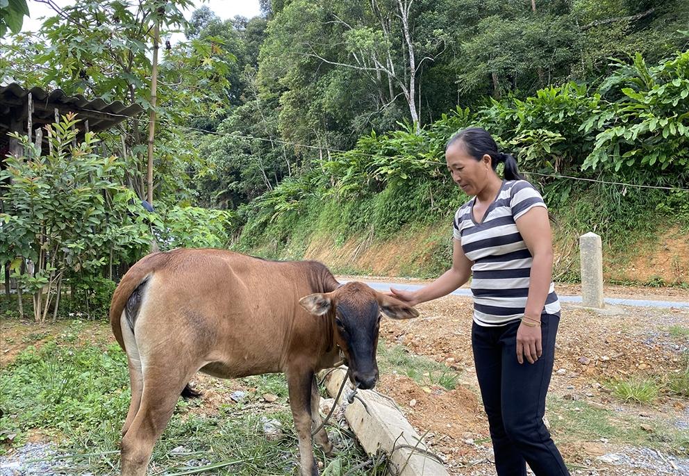 Bà Giàng Y Va ở bản Huồi Mụ, xã Huồi Tụ, huyện Kỳ Sơn (Nghệ An) rất vui khi được hỗ trợ bò giống