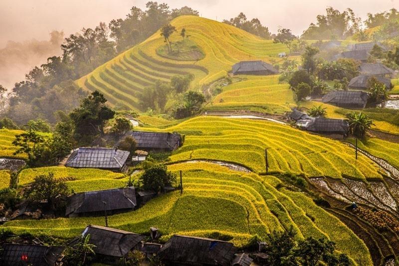 Du lịch khám phá mùa vàng trên tảng số đang được các địa phương triển khai, khi lúa đang độ chín vàng