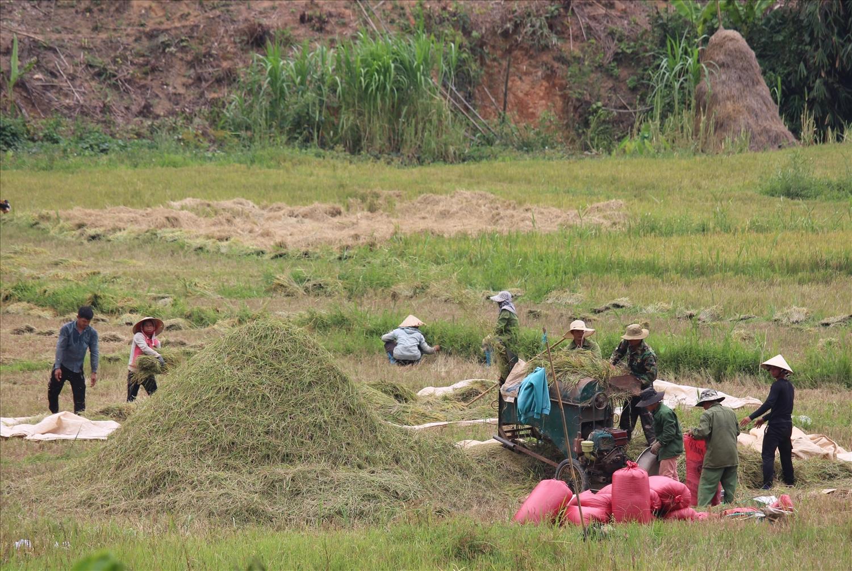 Bà con nông dân thu hoạch lúa, tuốt lúa tại ruộng
