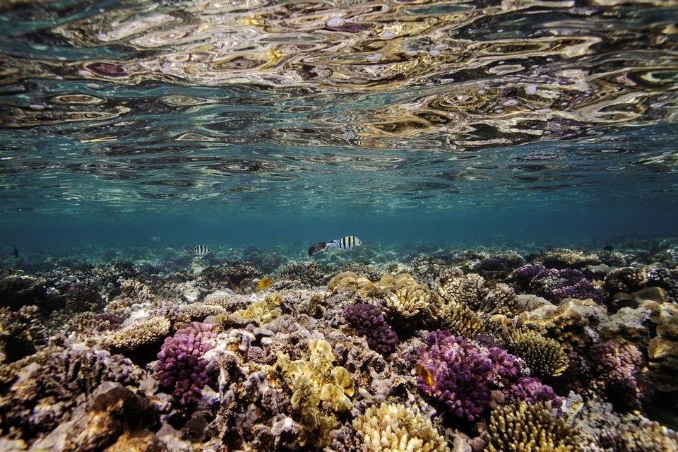 Ánh sáng mặt trời chiếu sáng một rạn san hô ở Biển Đỏ gần thành phố Jeddah, Saudi Arabia. Ảnh: Reuters