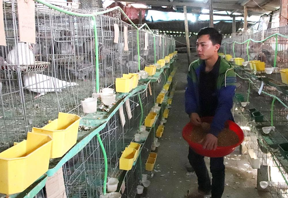 Mô hình nuôi chim bồ câu Pháp của anh Lưu Văn Bằng ở thôn Phi Lễ, xã Quý Sơn (Lục Ngạn) đem lại thu nhập 15 triệu đồng/tháng