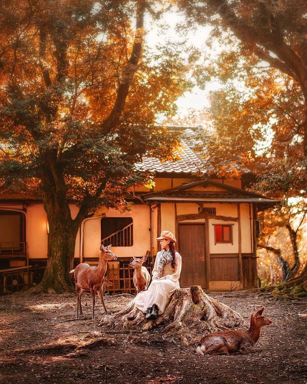 Không gian bên trong Công viên Nara thật bình yên và lãng mạn