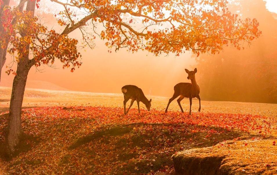 Khung cảnh bình yên- thơ mộng