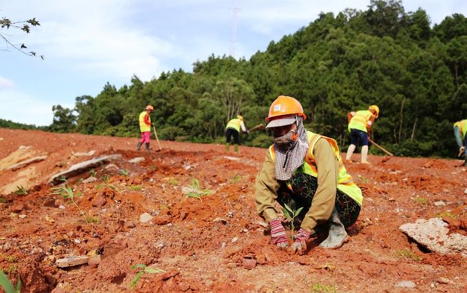 Một số dự án điện gió đang tiến hành trồng lại cây thay thế