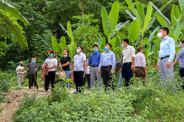 Người dân địa phương khác đến tham quan, học tập mô hình trồng chuối lấy lá ở xã Lưu Kiền