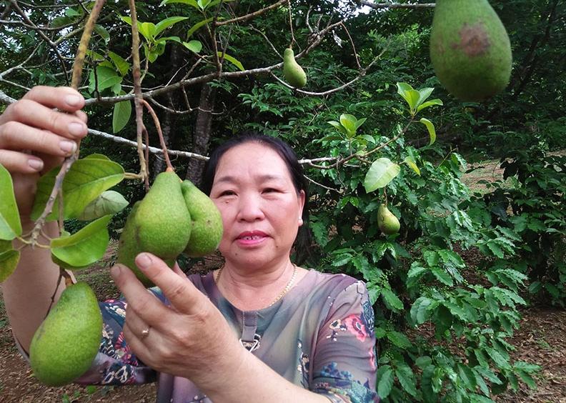 Tin Kinh tế: Phú Yên: Hỗ trợ phụ nữ miền núi phát triển kinh tế