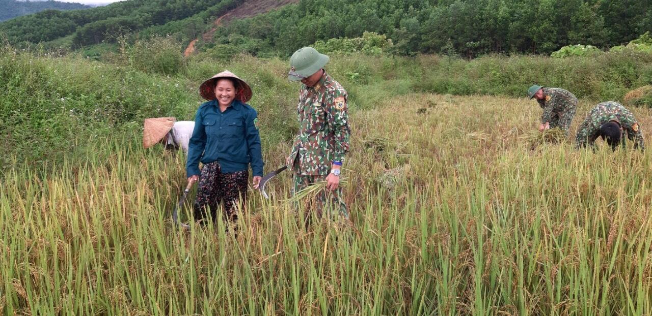 Cán bộ chiến sĩ Đồn Biên phòng hỗ trợ cây giống, hướng dẫn kỹ thuật trồng và chăm bón, thu hoạch lúa… cùng bà con khu TĐC