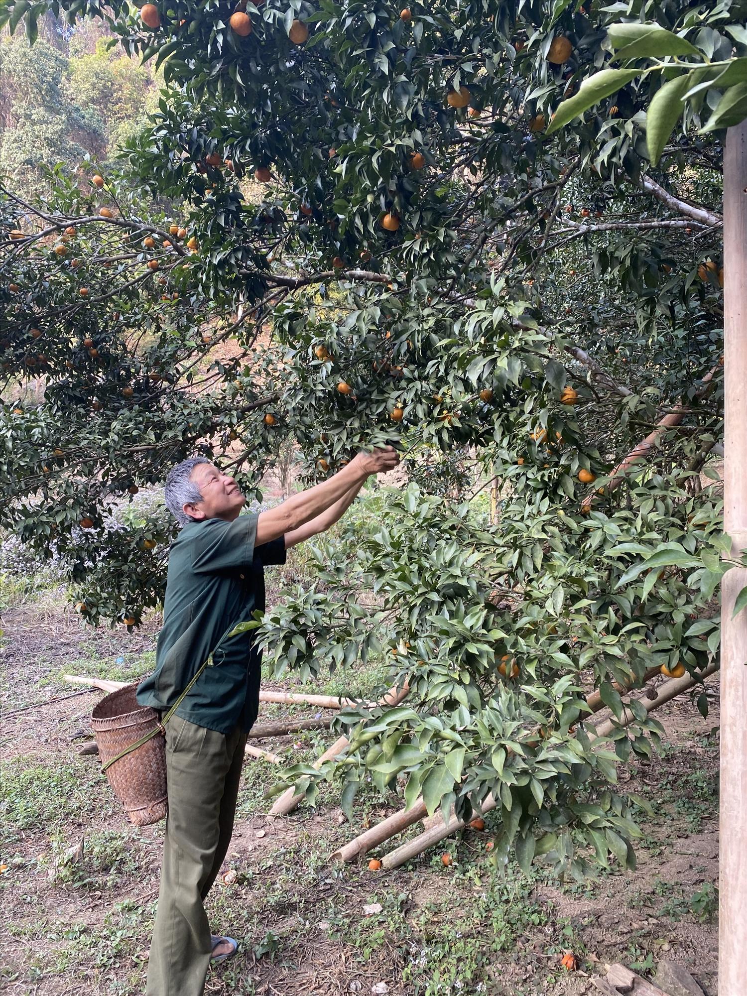 Người dân xã Nậm Lạnh, huyện Sốp Cộp thu hoạch nông sản