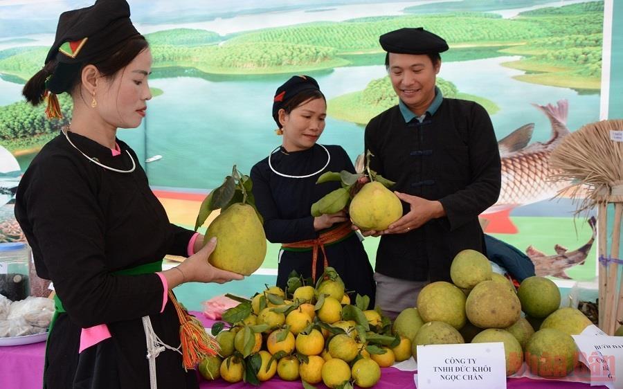 Anh Nông Kim Ngọc, xã Xuân Long, huyện Yên Bình (Yên Bái) giới thiệu sản phẩm bưởi, cam trồng từ trang trại gia đình. (Ảnh: THANH SƠN)