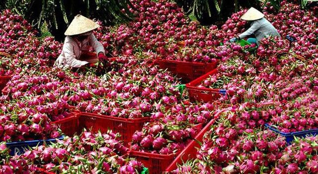 Trung Quốc là thị trường lớn thứ 2 của nông lâm, thủy sản Việt Nam. Ảnh minh họa - Nguồn: Dân trí.