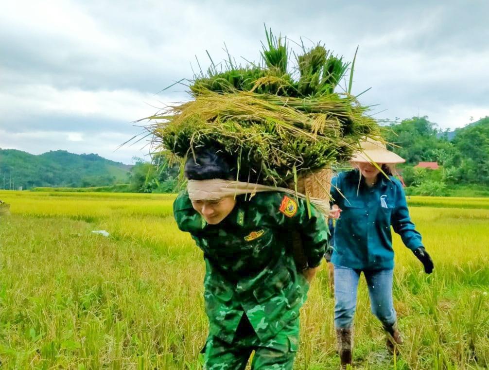 Hình ảnh Bộ đội biên phòng Yên Khương phối hợp với Hội LHPN xã Yên Khương giúp dân bản Chiềng Nưa thu hoạch lúa mùa tránh bão.(ảnh BĐBP Thanh Hóa)