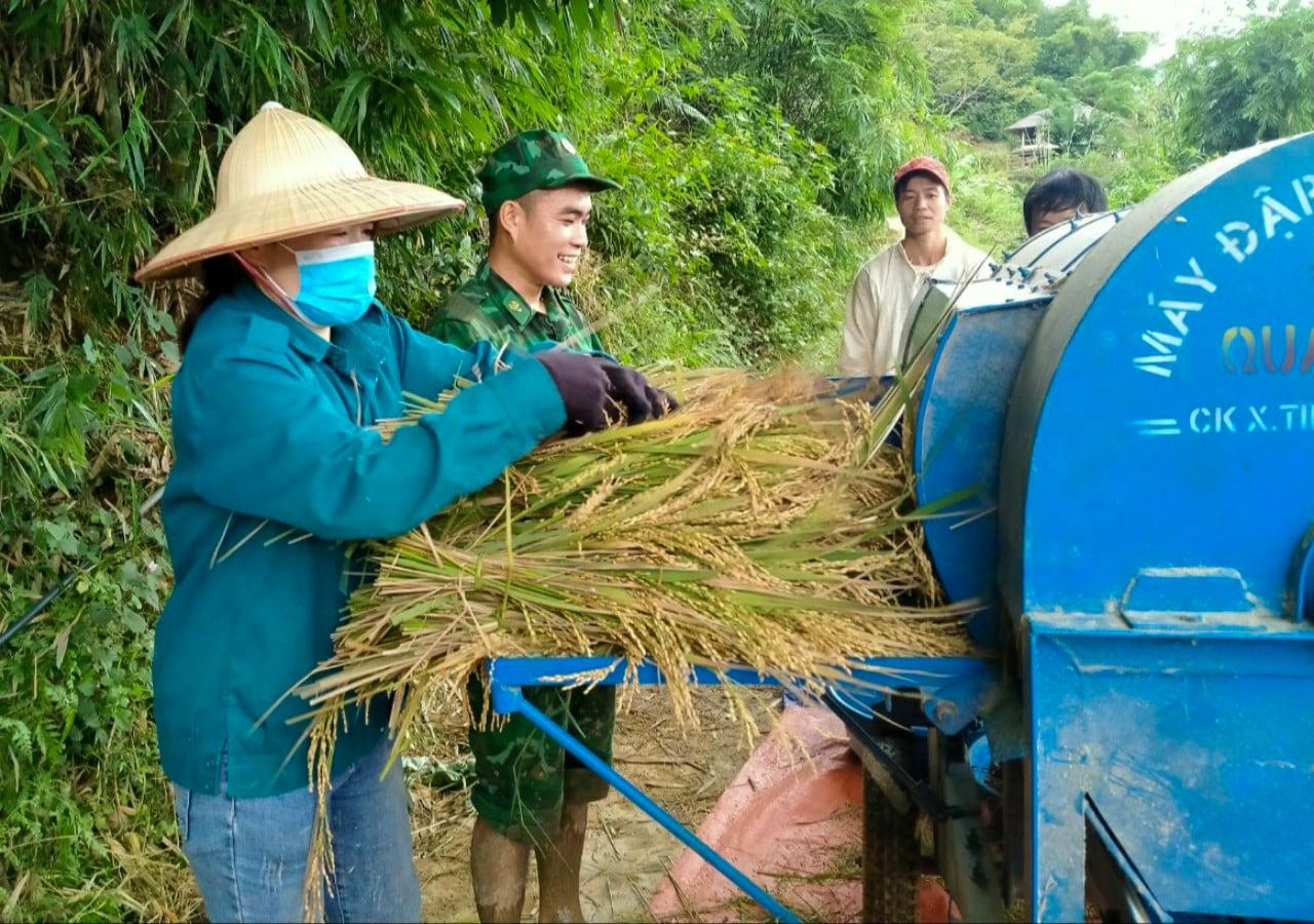 Bộ đội biên phòng Thanh Hóa giúp dân thu hoạch lúa tránh bão 1