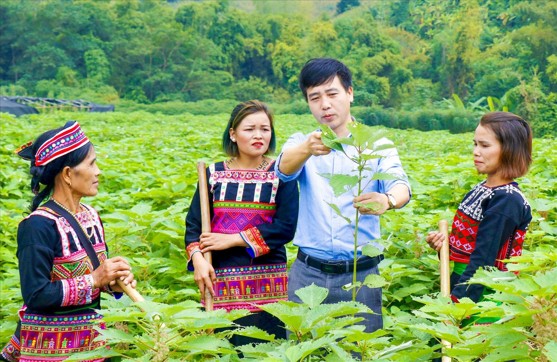 Dự án trồng cây Gai xanh tại huyện Văn Bàn được đông đảo chị em phụ nữ tham gia
